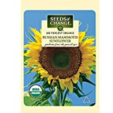Seeds of Change S10846 Certified Organic Russian Mammoth Sunflower