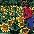 Park Seed Sunspot Sunflower Seeds
