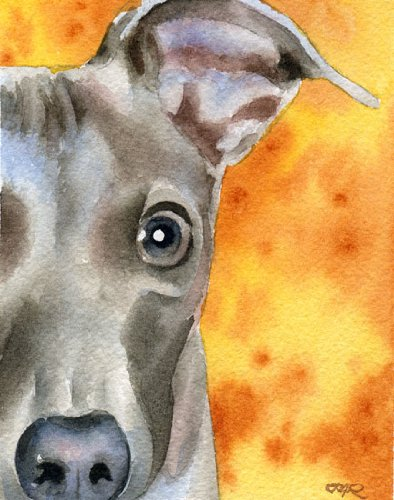 Italian Greyhound Dog Art Print by Artist DJ Rogers (Greyhound Art Dog)