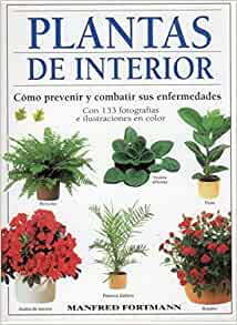 Plantas de interior : cómo prevenir y combatir sus