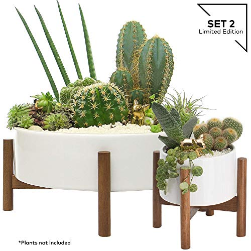Century Succulent Planters Container Drainage product image