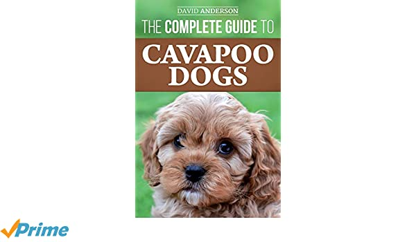 The Complete Guide to Cavapoo Dogs: Everything you need to