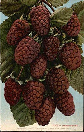 Loganberries Fruit Original Vintage Postcard