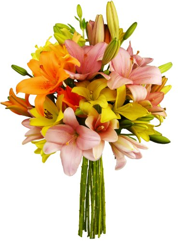 Bloom Flowers Fresh (Benchmark Bouquets 12 Stem Assorted Asiatic Lilies, No Vase)