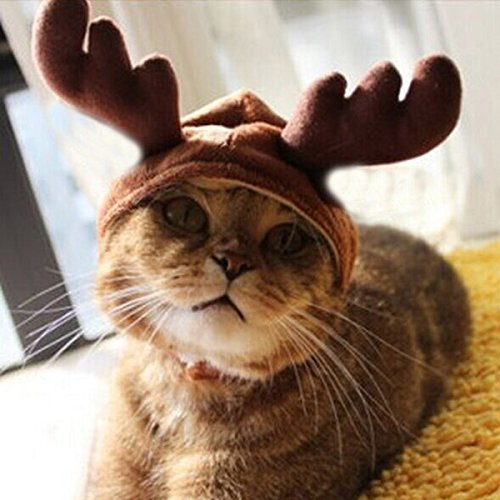 [Christmas Costume Pet Cat Doggy Antlers Cap Hat Pet Clothes] (Halloween Costume Wearing Overalls)