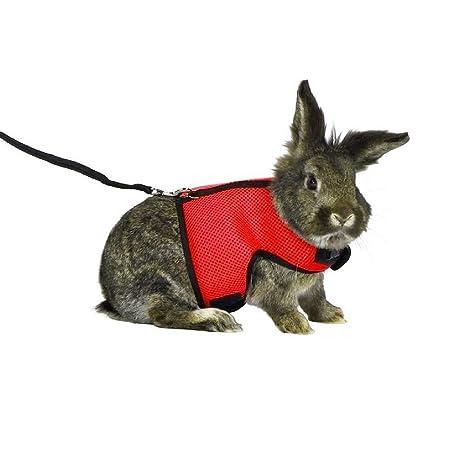 527BL - Arnés elástico Ajustable para Conejos y Hurones holandeses ...