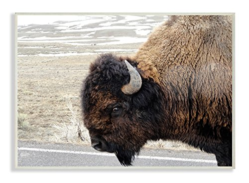 Stupell Industries Beautiful Buffalo Photography Wall Plaque Art, Proudly Made in USA made in Rhode Island