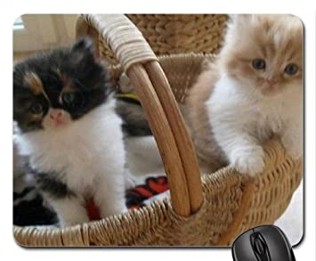 Dos gatitos en una cesta Cute Mouse Pad, Mousepad (Gatos Mouse Pad): Amazon.es: Hogar