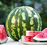 Crimson Sweet Watermelon Seeds, 150+ Premium Heirloom Seeds, 1 Selling Watermelon & ON SALE!, (Isla's Garden Seeds), Non Gmo Organic, 85% Germination Rates, Highest Quality Seeds, 100% Pure