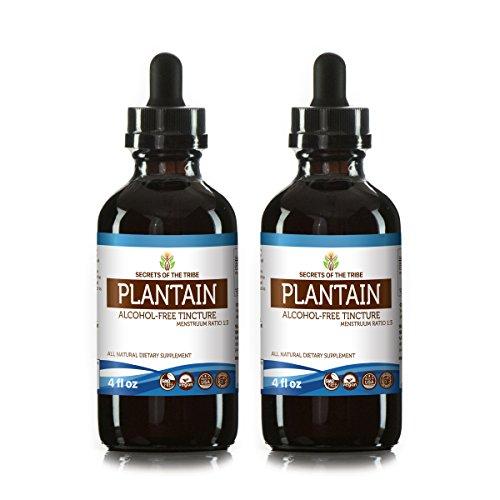 Plantain Alcohol-Free Liquid Extract, Organic Plantain (Plantago Major) Dried Leaf Tincture Supplement (2x4 FL oz) -