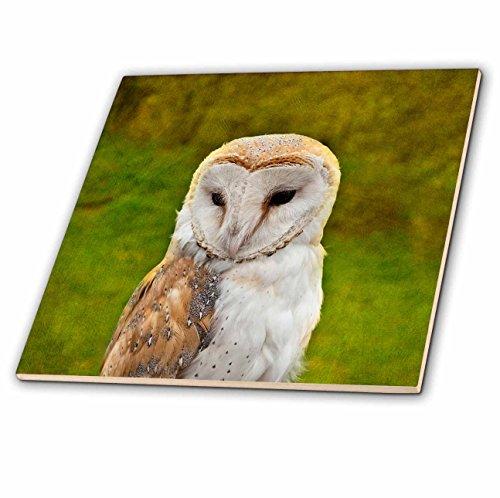 3dRose Alexis Photography - Birds - Closeup View of an Adorable owl Bird, Textured Green Background - 6 Inch Ceramic Tile (ct_286645_2) ()
