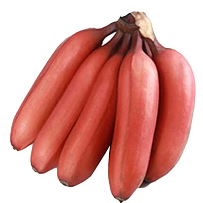 Onbay1 Nutrient-rich Garden Balcony Beautiful Fruit Plants Red Bananas Seeds Fruits: Home Improvement