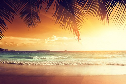 Tropical Beach Palm Trees Ocean Sea Nature Sunset Landscape