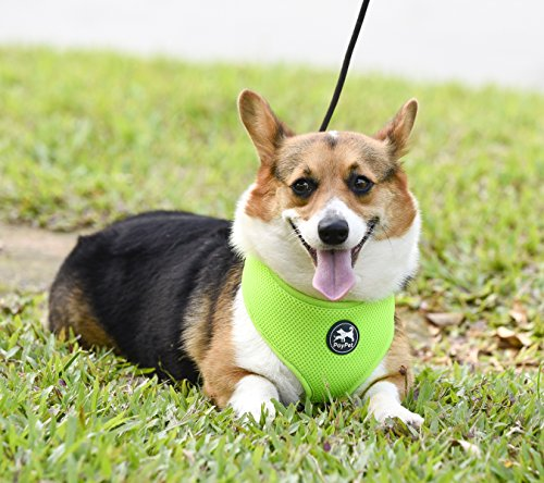 Most Comfortable Mesh Dog Harness,Soft Padded Vest,No Pull Easy Walking for Puppies and Dogs, Perfect for Daily Training,Walking Running,6 Stylish Colors and 4 Sizes. (M, Fluorescent Green) ()