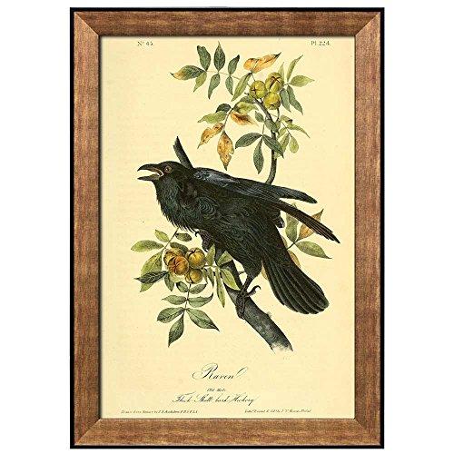 Beautiful Illustration Inside of an Elegant Frame of a Raven by John James Audubon Framed Art