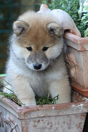 Read Online Cool Eurasier Dog Close Up Portrait Journal: 150 Page Lined Notebook/Diary ebook