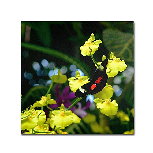 picture of Trademark Fine Art Doris Longwing Butterfly on Orchid Art by Kurt Shaffer, 35 by 35-Inch
