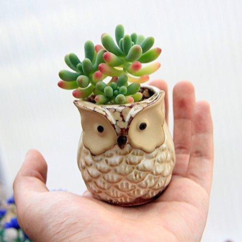 Top Planter Urns