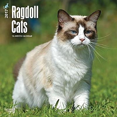 Ragdoll Cats 2017 Square 12x12 Wall Calendar