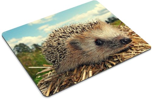 Hedgehog Grass Dry Branches Muzzle Mouse Pads Customized Made to Order Support Ready 9 7/8 Inch (250mm) X 7 7/8 Inch (200mm) X 1/16 Inch (2mm) High Quality Eco Friendly Cloth with Neoprene Rubber Liil Mouse Pad Desktop Mousepad Laptop Mousepads Comfortable Computer Mouse Mat Cute Gaming Mouse pad