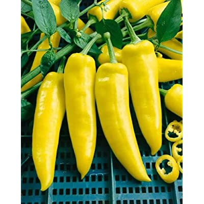 Todd's Seeds Hungarian Yellow Hot Wax Hot Pepper Heirloom Seed - 1g Packet : Vegetable Plants : Garden & Outdoor