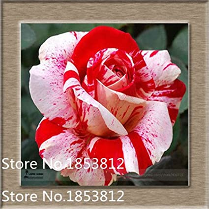 3dRose Tigerstriped Leaf Frog on a Lobster Claw Flower Snowflake Ornament 3