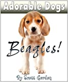 Adorable Dogs: Beagles (Cute!)