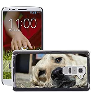 Hot Style Cell Phone PC Hard Case Cover // M00117252 Dogs Animals Fur Main Eyes Nos // LG G2 D800 D802 D802TA D803 VS980 LS980