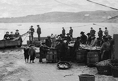 Donegal Fish (Buyenlarge Donegal Fish, Ireland - 8