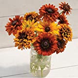 David's Garden Seeds Flower Rudbeckia Cherokee Sunset Mix SL4532 (Multi) 50 Non-GMO, Open Pollinated Seeds