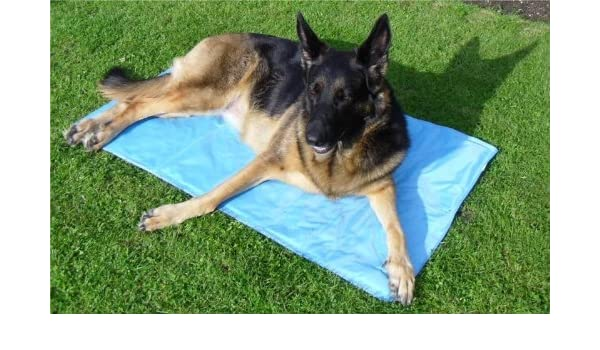 Doghealth Cama de autorrefrigeración para Perro Grande, 90 x 90 cm: Amazon.es: Productos para mascotas