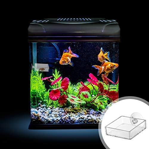 Acuario Plato Alimentador de Camarones Tanque de Peces de Vidrio Cuencos de Alimentación  Bandeja Reptiles Flotantes 5