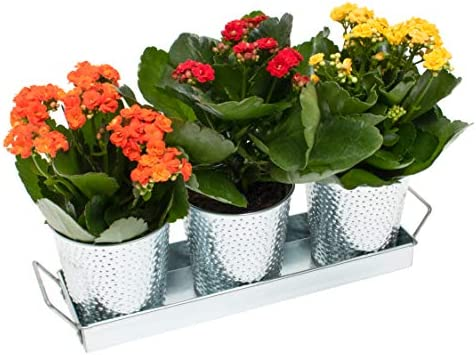 Windowsill Herb Pots Galvanized Planters product image