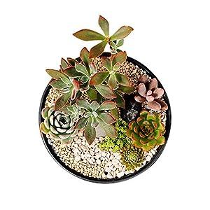 GeLive Ceramic Succulent Planter Plant Pot Flower Vase Windowsill Box Home Accent Decoration Matt Black