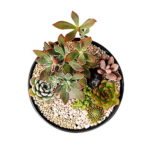 GeLive Ceramic Succulent Planter Plant Pot Flower Vase Windowsill Box Home Accent Decoration Matt Black