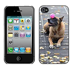 GoGoMobile Slim Protector Hard Shell Cover Case // M00124831 Malinois Dog With Ball Sweet // Apple iPhone 4 4S 4G