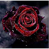 YEESAM ART New 5D Diamond Painting Kit - Morning Dew & Rose - DIY Crystals Diamond Rhinestone Painting Pasted Paint by Num
