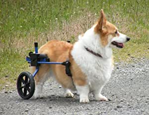 K9 Carts Rear Support Wheelchair - Medium - White