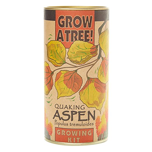 Quaking Aspen   Tree Seed Grow Kit   The Jonsteen Company