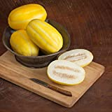 buy David's Garden Seeds Fruit Melon San Juan DY3415 (Yellow) 25 Non-GMO, Hybrid Seeds now, new 2019-2018 bestseller, review and Photo, best price $9.95