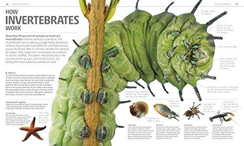 Explanatorium of Nature (Dk Smithsonian) by DK Children (Image #3)
