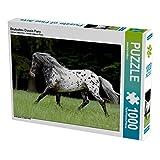 Deutsches Classic Pony 1000 Teile Puzzle quer: von Jeanette Hutfluss (CALVENDO Tiere)