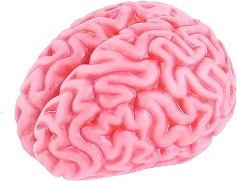 NUOBESTY Cerebro de Juguete de Halloween, Cerebro Blando ...