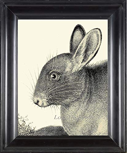 (Bunny Rabbit Print Wall Art Beautiful Antique Vintage Black and White Illustration Drawing Picture Forest Farm Animal Pet Home Room Decor 11x14 13x19 16x20 Unframed)