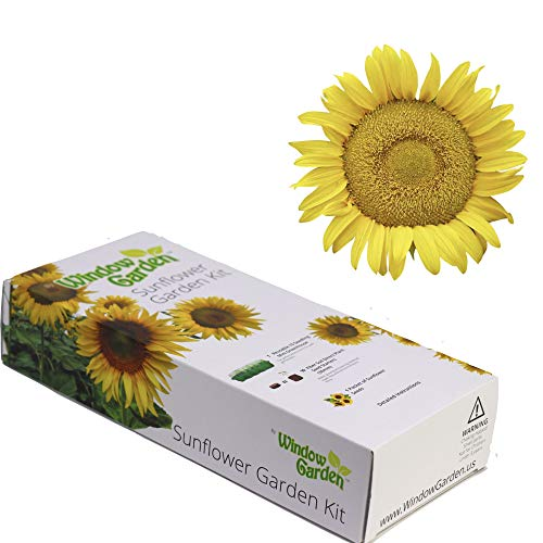(Garden Starter Kit (Dwarf Sunspot Sunflower) - Grow Sun Flower Seed in a Mini Greenhouse, Then Plant a Beautiful Patch of Sunflowers in Your Yard. It's Easy, Fun, and a Great Gift for Adults and Kids)