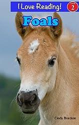 Foals - Baby Horse (An