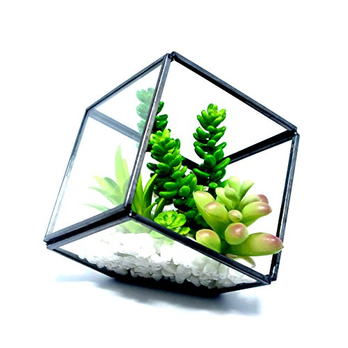Cvens Clear Glass Terrariums,Geometric Terrariums,Geometric Air plants terrarium,Succulent planters,Artficial Plants Air Plant Geometric Terrariums Holder for Tabletop Succulent Plants Holder by Cvens