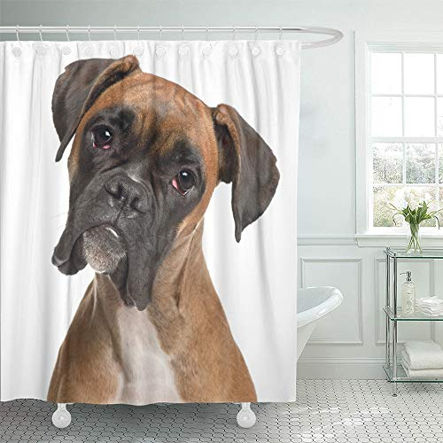 - Emvency Shower Curtain Set Waterproof Adjustable Polyester Fabric Brown Dog Close Up of Boxer 12 Months Old in Front White Puppy Head Sad Looking 60 x 72 Inches Set with Hooks for Bathroom