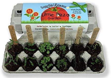 Amazon.com: Juego de plantas Backyard Safary Company, Jardín ...