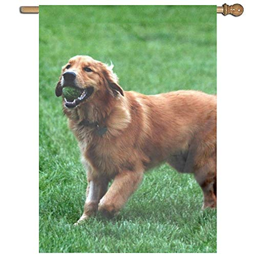 Fornate Golden Retriever Welcome Garden Flag Spring Decorative House Decor Flags 27 x 37 Inch